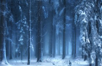 Beautiful Blue Forest In Winter 1920 x 1200 1 340x220