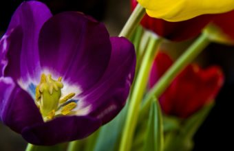 Beautiful Purple Flower 1920 x 1200 340x220