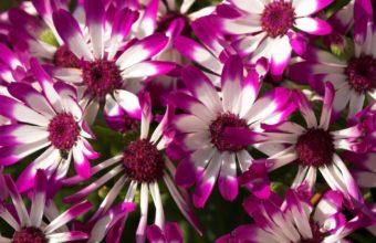 Beautiful Purple Flowers 2560 x 1600 340x220
