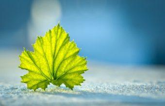 Beautiful Single Leaf 1920 x 1200 340x220
