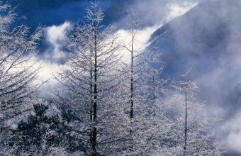 Beautiful Winter Landscapes 1280 x 1024 340x220
