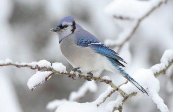 Bird Snow Spotted 1440 X 900 340x220