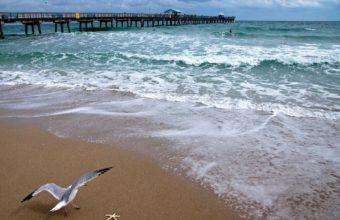 Bridge Seagull Ocean Coast Sea Beach 1920 x 1200 340x220