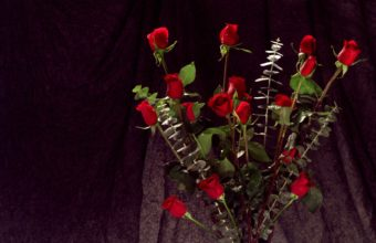 Bunch Of Red Roses 1680 x 1050 340x220