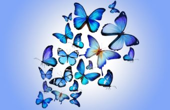 Butterfly Colorful Blue 5010 x 3340 340x220