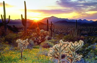 Cactus Landscapes Sunset 1920 x 1200 340x220