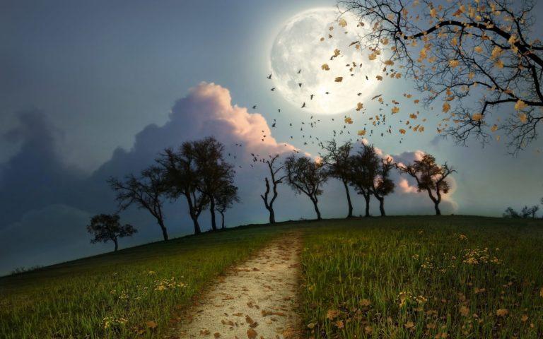 Cg Digital Art Manip Night Moon Birds 1920 x 1200 768x480