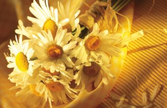 Chamomile Flower Petals 1920 x 1200 340x220