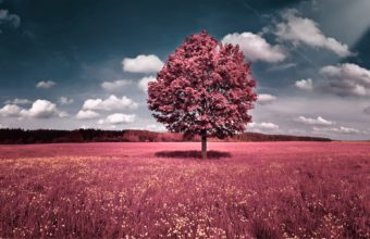 Clouds Landscapes Trees Flowers Pink 1920 X 1200 340x220
