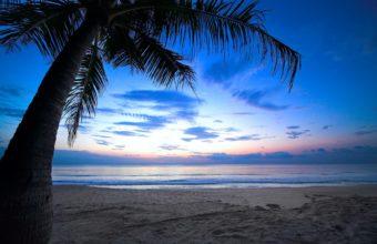 Cloudy Sky Weeping Palm Tree Tropica 1229 x 768 340x220