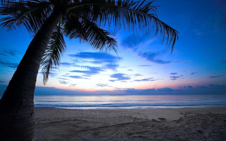 Cloudy Sky Weeping Palm Tree Tropica 1229 x 768 768x480