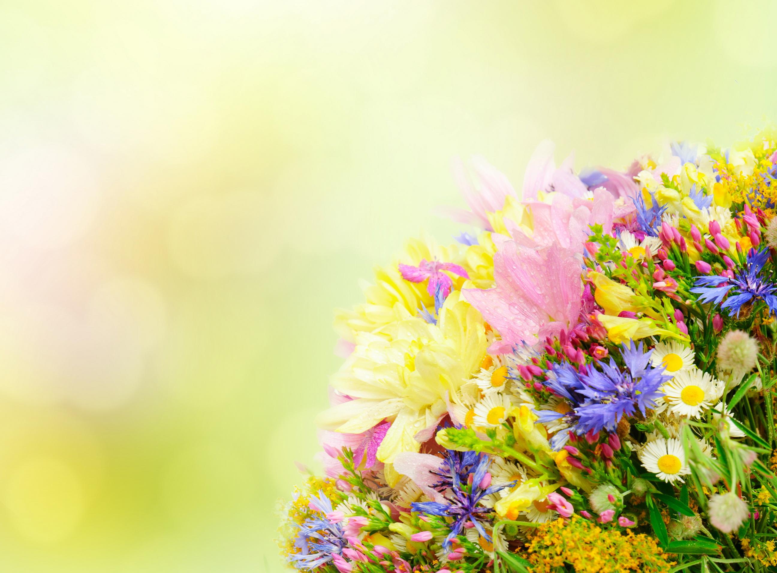 color flower wallpaper  Color Petals Bouquet Flowers - [2592 x 1913]