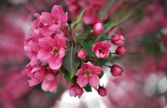 Color Pink Petals 2560 x 1600 340x220