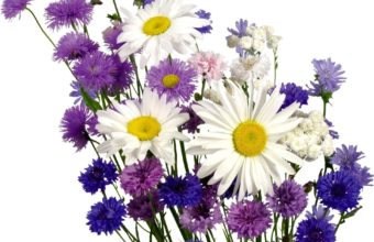 Daisies Cornflowers Carnations 1920 x 1536 340x220
