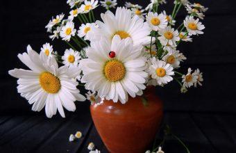 Daisies Flowers Bouquet 1280 x 1024 340x220