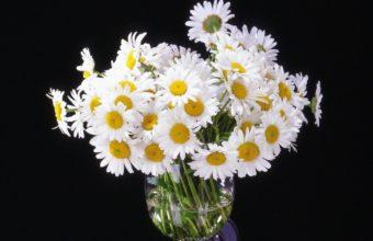 Daisy Flowers Bouquet 1217 x 900 340x220