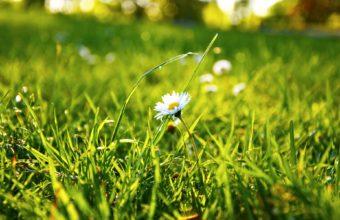 Daisy In Grass 1920 x 1200 340x220