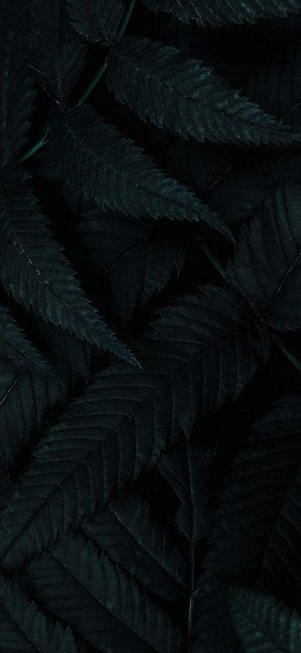 Dark Phone Wallpaper 355 1080x2340 340x737