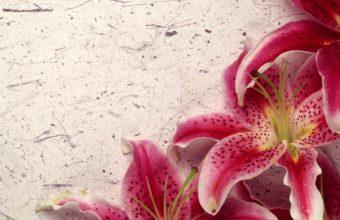 Decor Lily 1680 x 1050 340x220