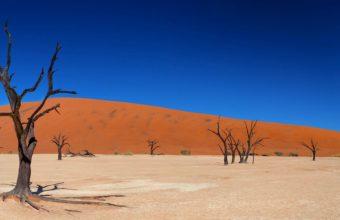 Desert Shrubs 3840 x 1200 340x220