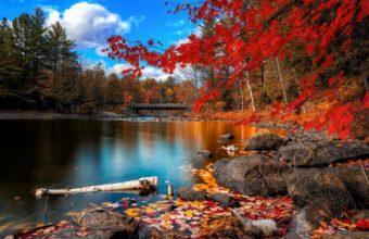 Fall Foliage 2880 x 1800 340x220