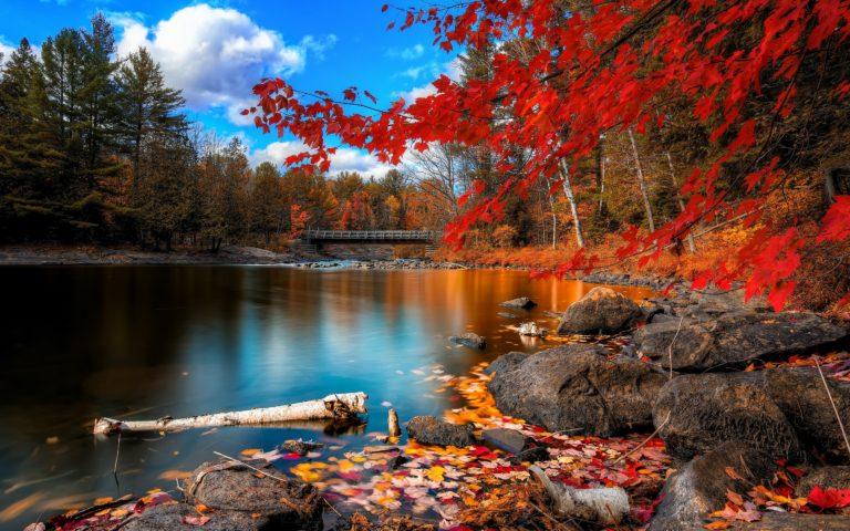 Fall Foliage 2880 x 1800 768x480