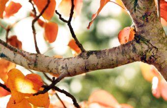 Fall Tree 1920 x 1080 340x220