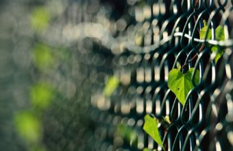 Fences Leaves Macro Depth Of Field 1920 x 1200 340x220