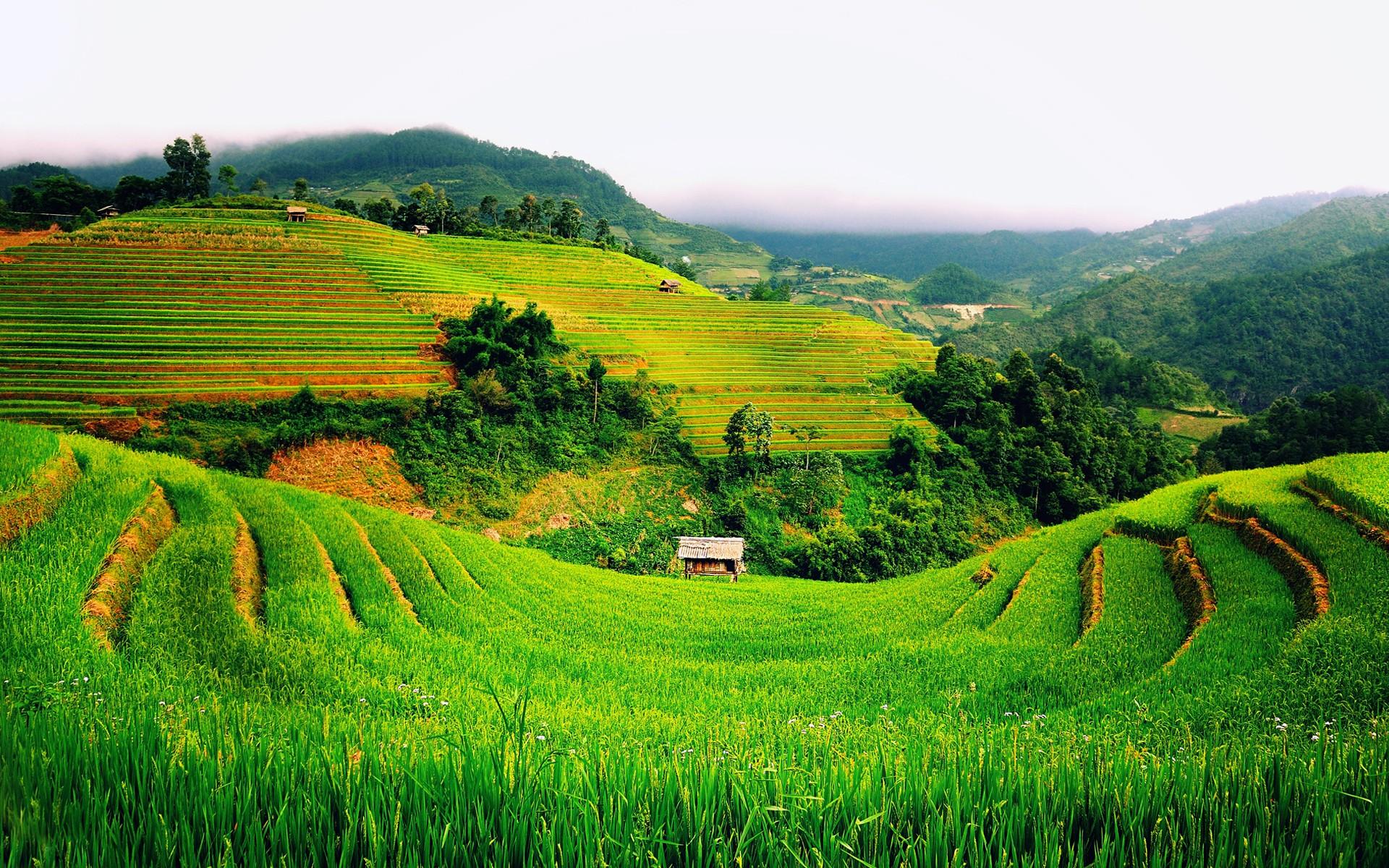 холмы плантации загрузить