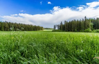 Field Grass Forest Trees Sky Landscape 4345 x 2897 340x220