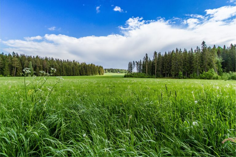 Field Grass Forest Trees Sky Landscape 4345 x 2897 768x512