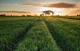 Field Grass Sun Sky 2560 x 1600 340x220