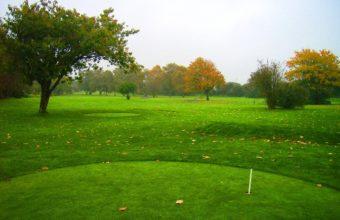 Field Grass Trees 2048 x 1536 340x220