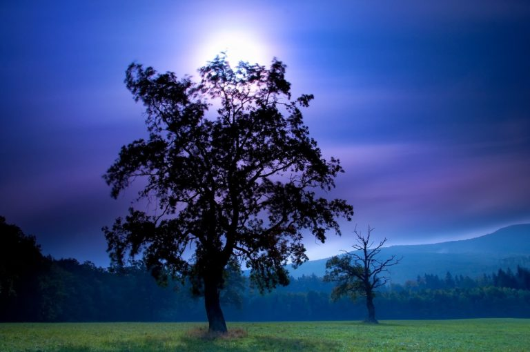 Field Night Tree Moon Sky Mountains 1920 x 1274 768x510