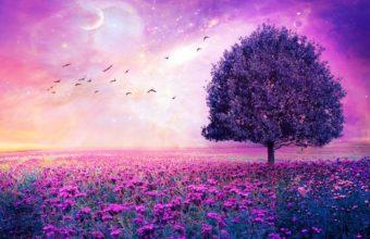 Field Tree 3d Art Stars Bokeh Sky Flowers 3000 x 2400 340x220