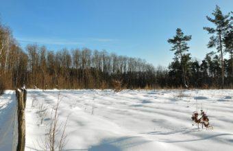 Field Winter Snow 1440 X 900 340x220