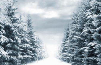 Fir Trees Winter Avenue 1440 x 810 340x220