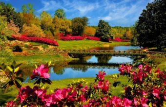 Flower Lake Landscape 4000 x 2500 340x220