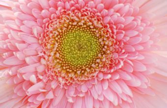 Flower Petals 2560 x 1600 340x220