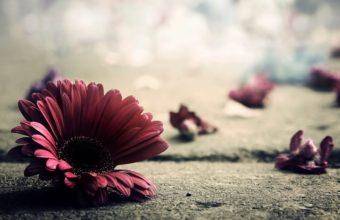 Flower Petals Bright 1920 x 1080 340x220
