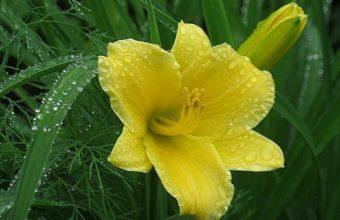 Flower Petals Drops 1200 x 900 340x220