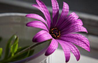 Flower Petals Purple 1920 x 1080 340x220