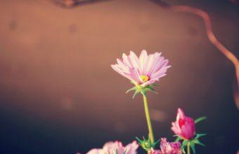 Flower Pink Petals 1125 x 900 340x220