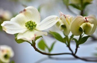 Flower Plant White 1920 x 1200 340x220