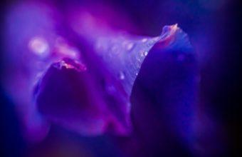 Flower Purple Lilac Violet Drops Dew 1920 x 1200 340x220