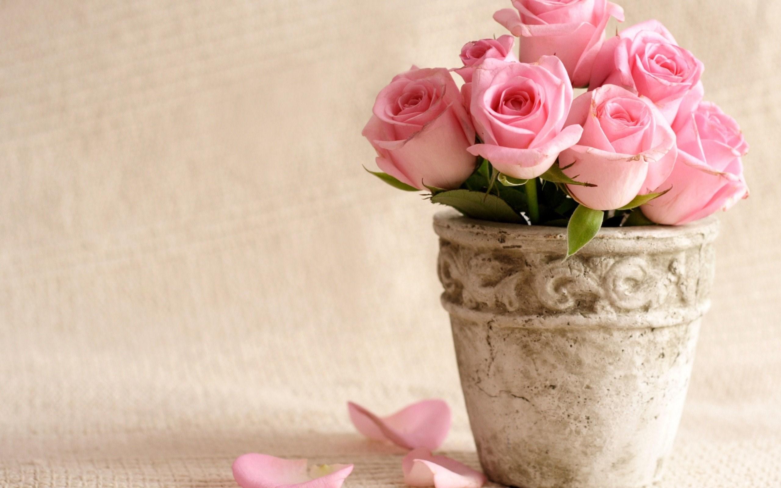 Flowers bucket roses vase pink roses wallpaper 2560x1600 2560 x flowers bucket roses vase pink roses wallpaper 2560x1600 2560 x 1600 mightylinksfo