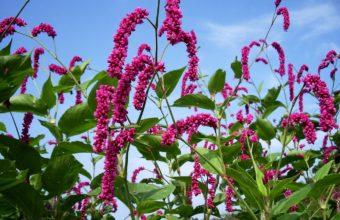 Flowers Pink High 1371 x 900 340x220