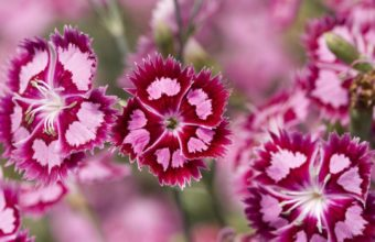 Flowers Pink Purple 1200 x 900 340x220