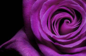 Flowers Purple Macro Flower Petals 2560 x 1600 340x220