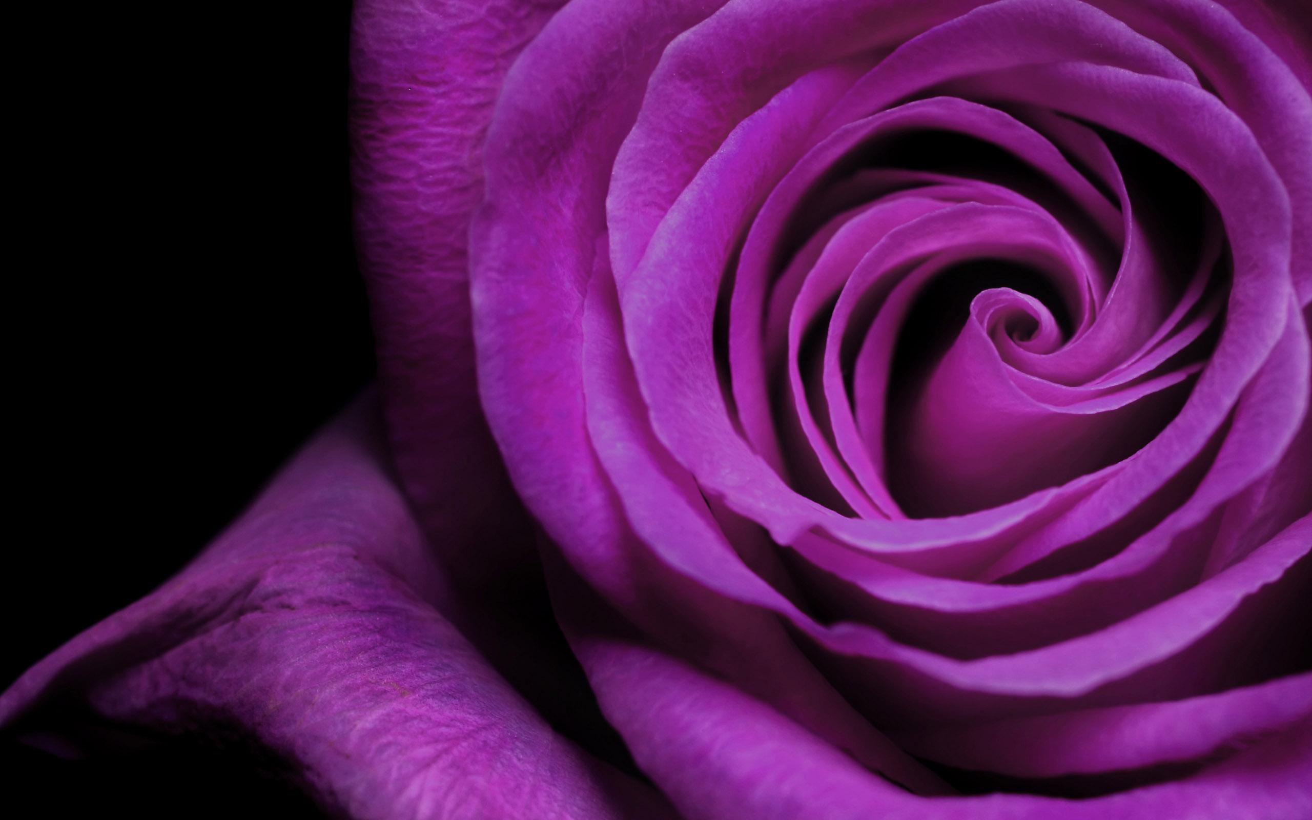 Flowers purple macro flower petals 2560 x 1600 mightylinksfo